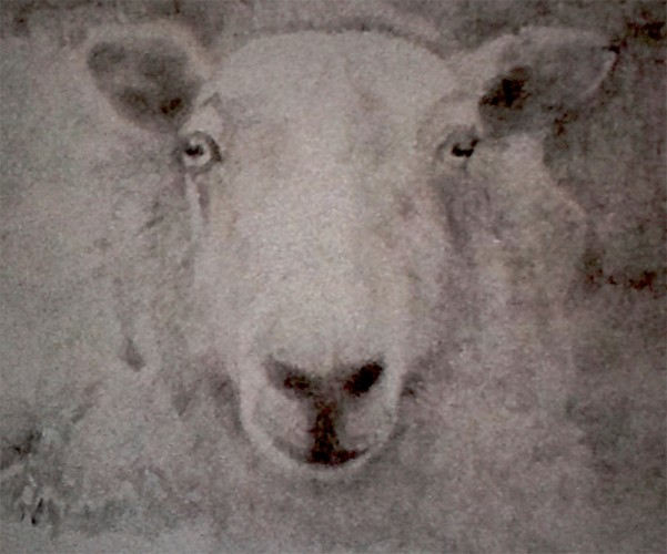 131104-s-silverpoint--Ever-Blanco-Valverde,-_Wolf-in-Sheep's-Clothing_,-silverpoint,-22-x-22-p