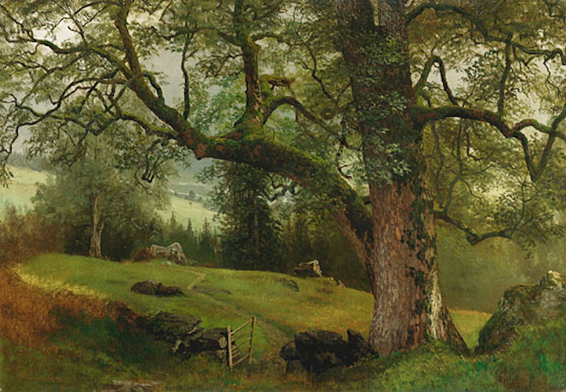 Albert Bierstadt (1830–1902), A Trail through the Trees. Oil on board 20½ x 29 7/16 in.