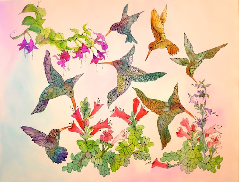 Cirigliano.hummingbirds.2015.inkandwatercolordrawing,arches.20x26