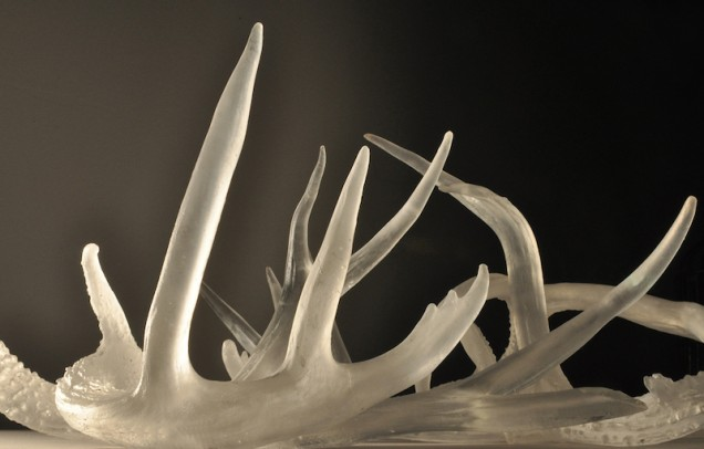 Antlers-close-up
