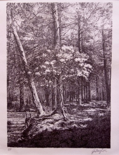 Stone lithograph by Jessie Taylor