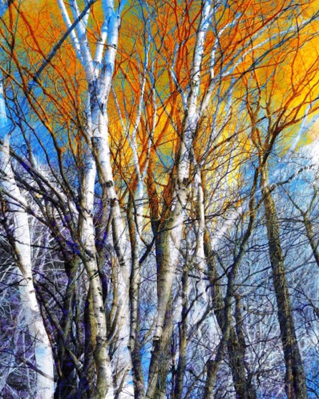 Tree Composite 28